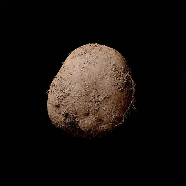 potato photographer of the year